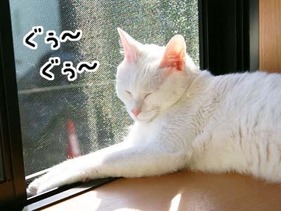 cat608