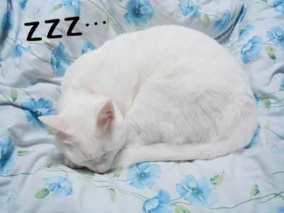 cat612