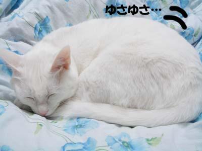 cat613