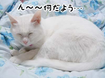 cat614