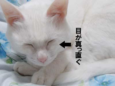 cat615