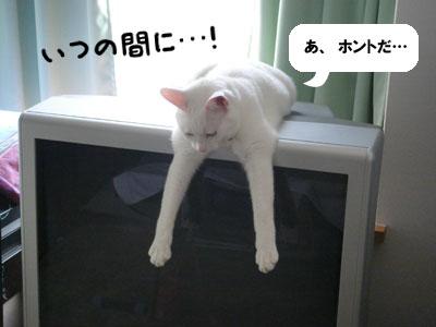 cat617