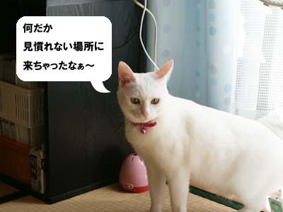 cat618