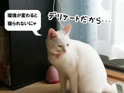 cat619