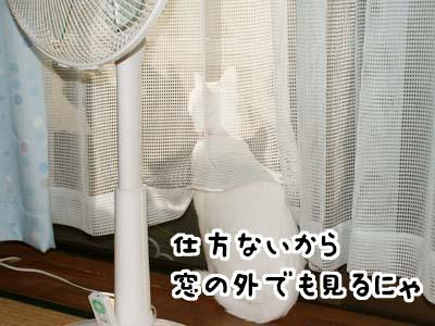 cat620