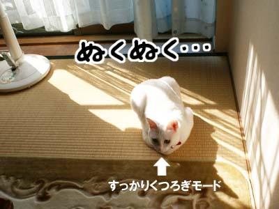 cat621