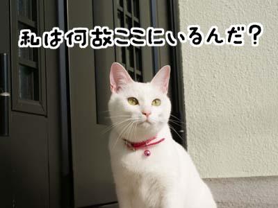 cat627