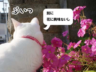 cat629