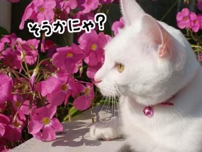 cat630