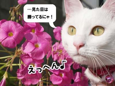cat631