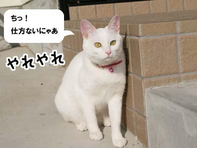 cat632
