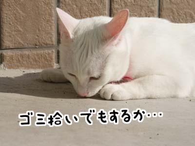 cat633