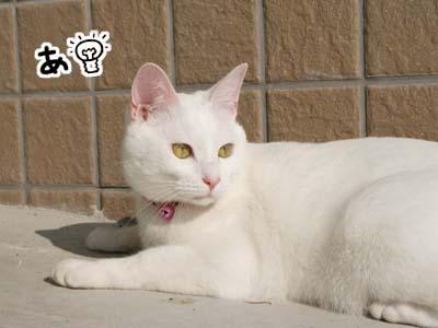 cat634