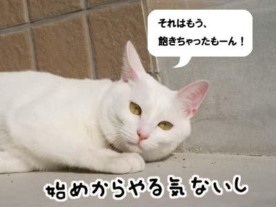 cat636