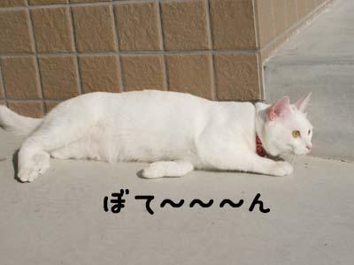 cat638