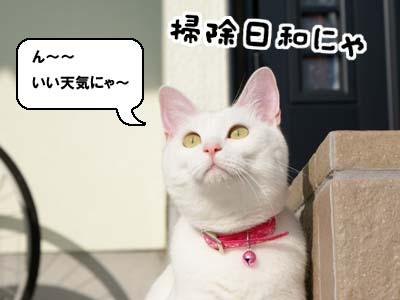 cat640