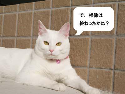 cat641