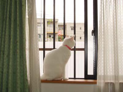 cat642