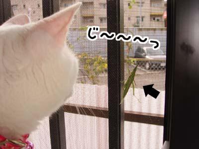 cat643