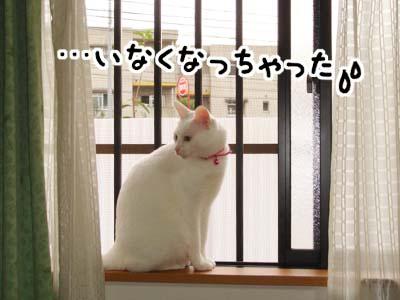 cat646