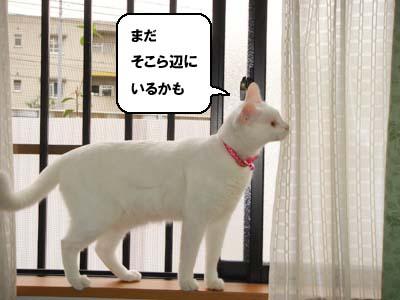 cat647