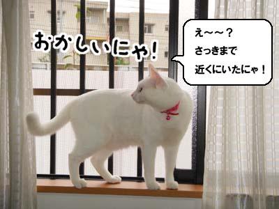 cat648