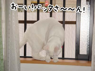 cat649