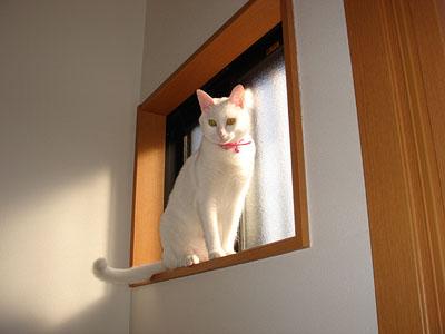 cat655