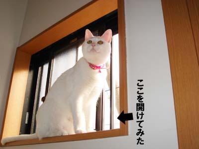 cat656