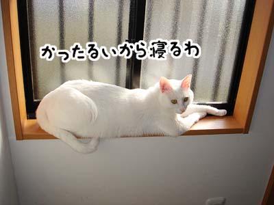 cat658