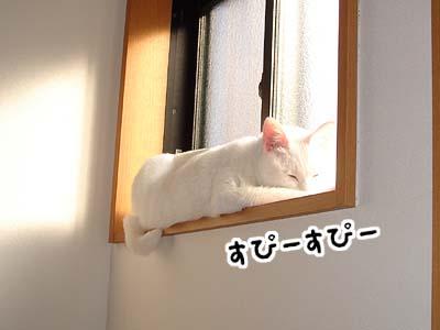 cat659