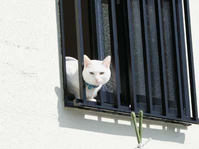 cat661