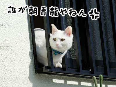 cat662