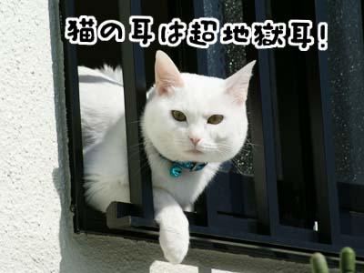 cat663