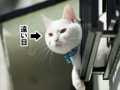 cat665