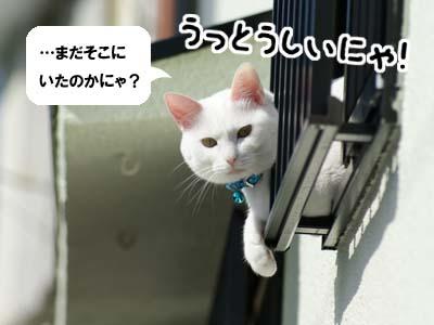 cat666