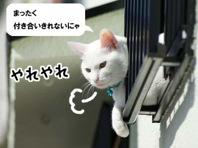 cat667