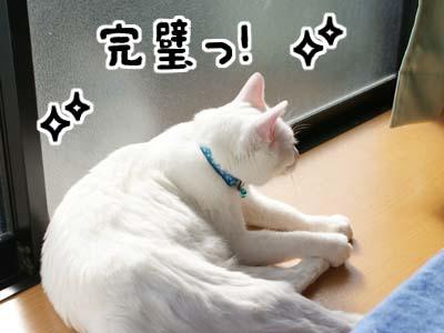 cat669