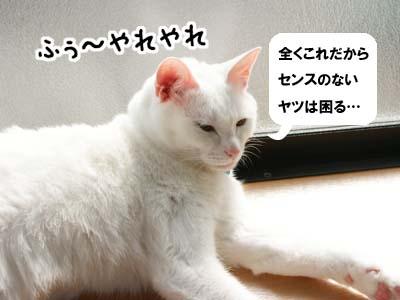 cat671