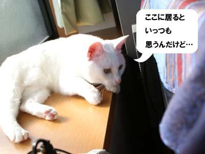 cat672