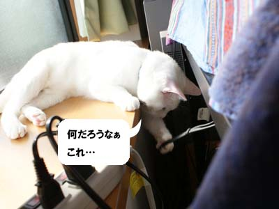 cat674