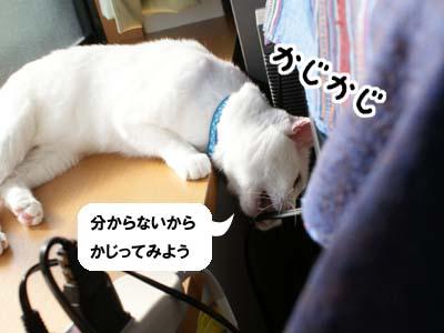 cat675