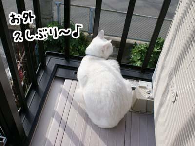cat676
