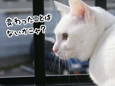 cat677