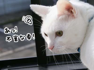 cat678