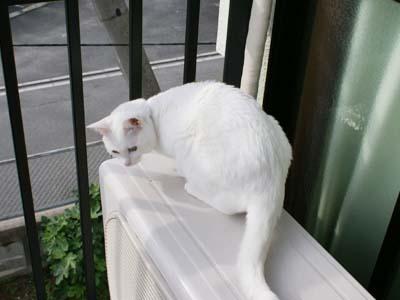 cat680