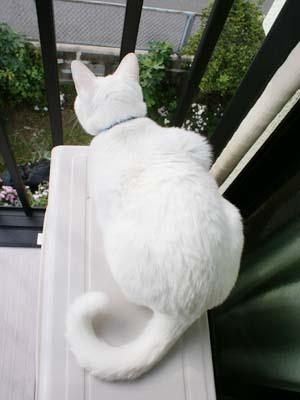 cat681