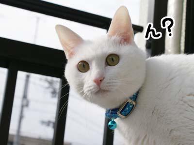 cat682