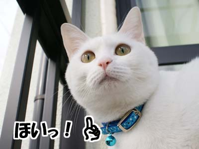 cat683