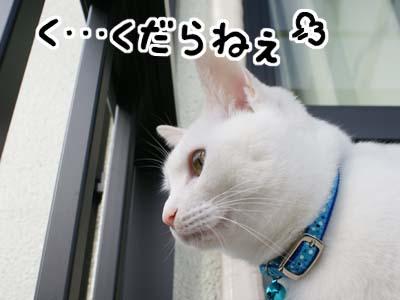 cat684